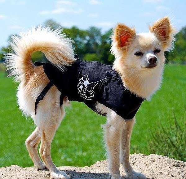Las chaquetas Thunder Shirt y Anxiety Wrap ayudan a los perros con ansiedad por separación.