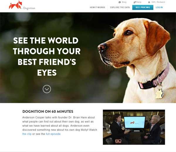 Conoce más sobre Dognition: