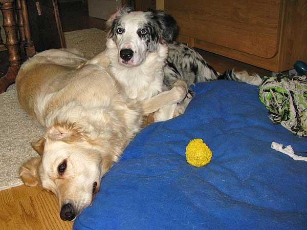 Incorporar un segundo perro en casa ¿Es buena idea? 10 cosas a tener en cuenta.