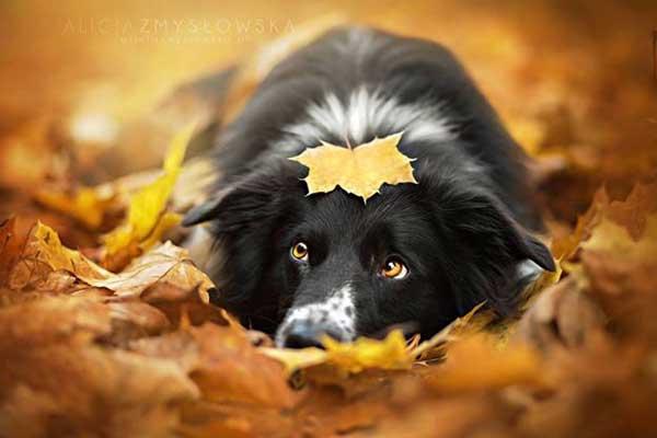 Alicja Zmyslowska no hace fotos de perros... ¡Hace magia!