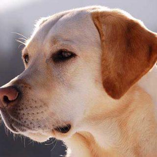 Y las razas de perros que mas muerden son... (no son las que piensas).