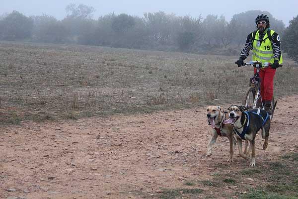 @Mushingmonegros III Carrera de Fuentes Claras con Perros de Tiro, así ha sido. (Ganadores por categorías).