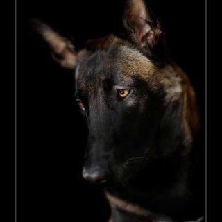 Retratos de perros muy naturales, por Andy Hunger.