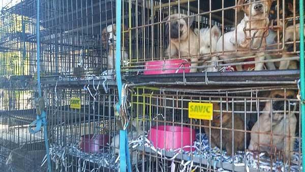 Interceptado un camión ilegal en Zaragoza que transportaba animales para su venta esta Navidad en tiendas de todo el país. El tráfico de cachorros continúa en España.
