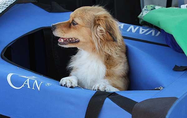 Normativa europea (2015) para el transporte de animales