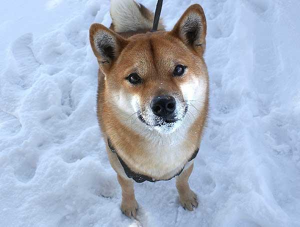 Si los perros colaboran con nosotros... Nosotros deberíamos colaborar con ellos ¿no?