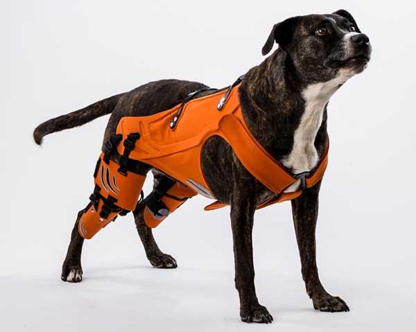 Arnés HIPSTER para perros con displasia de cadera.