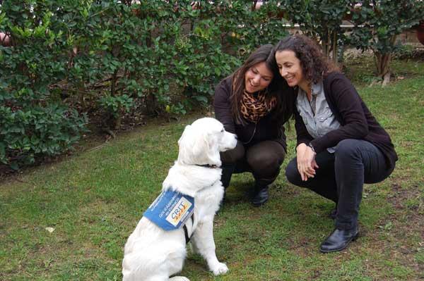 PURINA socializa a futuros perros de asistencia gracias a un programa pionero