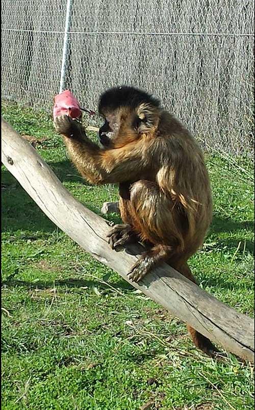 La cognición y la empatía en primates y perros
