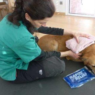 Fisioterapia veterinaria: objetivos, pacientes y técnicas.