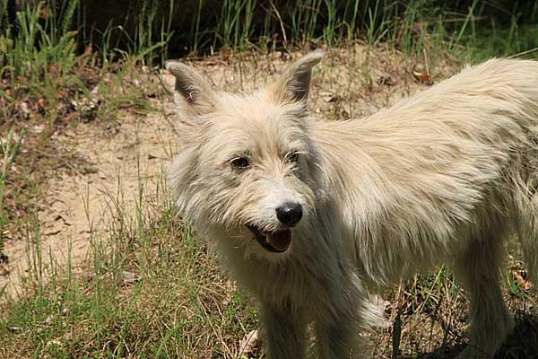 """Los perros más """"educados"""" se adoptan antes, estudio sobre 289 perros."""