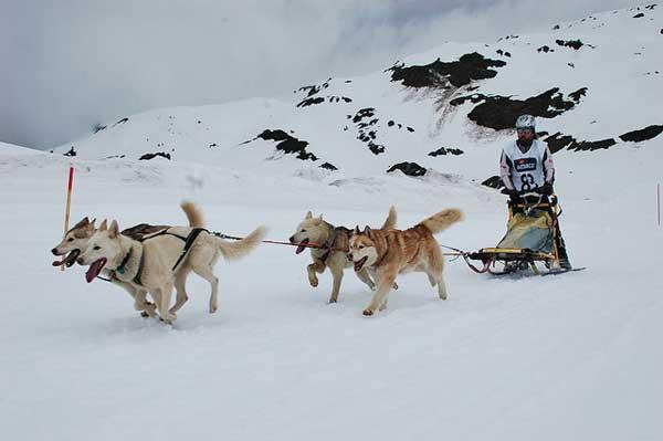Port Ainé acoge este fin de semana la segunda prueba de la Copa Gos Àrtic.