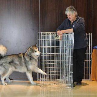 """""""Es injusto castigar a un perro por simplemente no saber cómo hacer algo... ¿Por que no enseñamos cómo hacerlo y dejamos de recurrir simplemente al castigo pro no saber hacerlo?"""". Kay Laurence, en su último libro """"La revolución del clícker""""."""