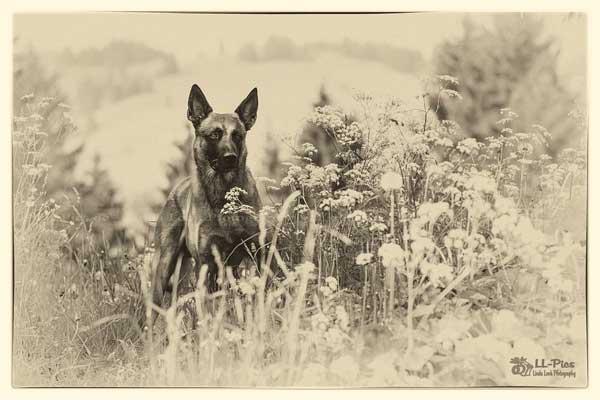 Las fotos de perros de Linda Look.