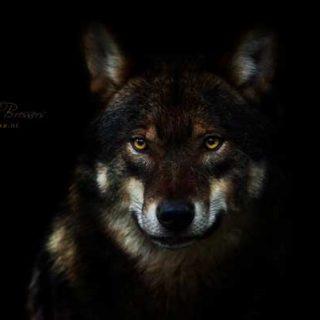 Foto Foosa Wildlife and Nature Photography.