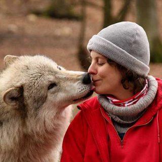 La cooperación entre perros y humanos se basa en las habilidades sociales de los lobos