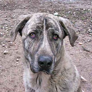 Desensibilización Vs Habituación en los perros