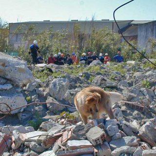 Rescate Canino Método Arcón (síntesis descargable).