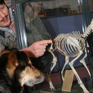 Adam Miklósi en Madrid: Seminario sobre las emociones de los perros y la ansiedad por separación