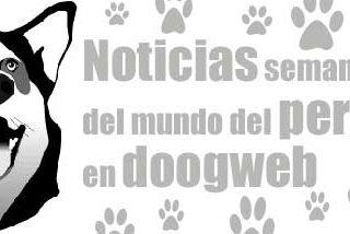 Noticias de perros, de la semana del 29 de diciembre al 4 enero.
