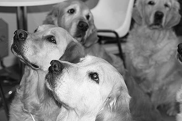 Perros que ayudan a pacientes con cáncer