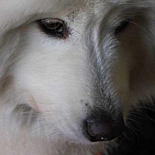 La verdad (incómoda) sobre las razas de perros. Y es que no, no todos los perros son iguales, ni todas las razas tienen los mismos comportamientos y necesidades.