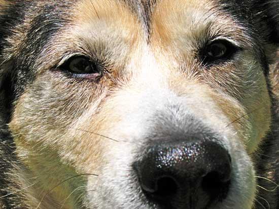 Los perros nos hablan. Pero... ¿sabemos lo que nos dicen?