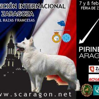 Exposición Canina de Aragón 2015: XXXV Exposición Internacional Canina y Pirineos Aragón Nacional 2015.