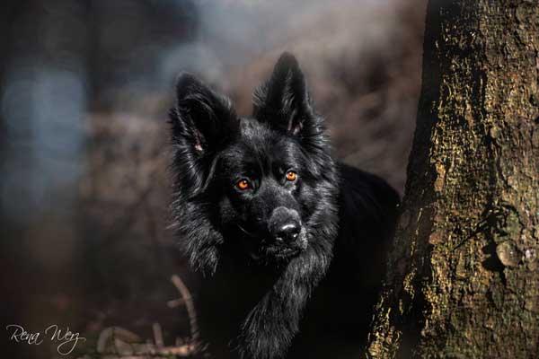 Futur@s grandes fotógraf@s (de perros, claro). Rena Werz estará ahí.