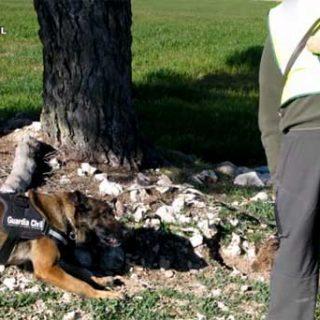 Perros entrenados, el medio más rápido y fiable de lucha contra el veneno