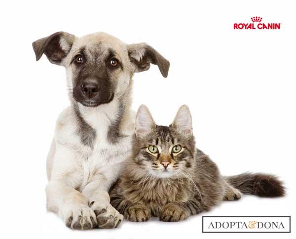 @RoyalCanin_Es Tú adoptas... Y Royal Canin dona pienso a las protectoras.