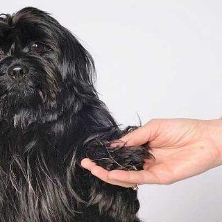 ¿Tu perro quiere que le acaricies? Ojo, ¡No a todos los perros les gusta ser acariciados!