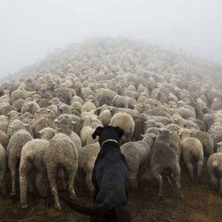 """Andrew Fladeboe y """"El reino del pastor"""""""