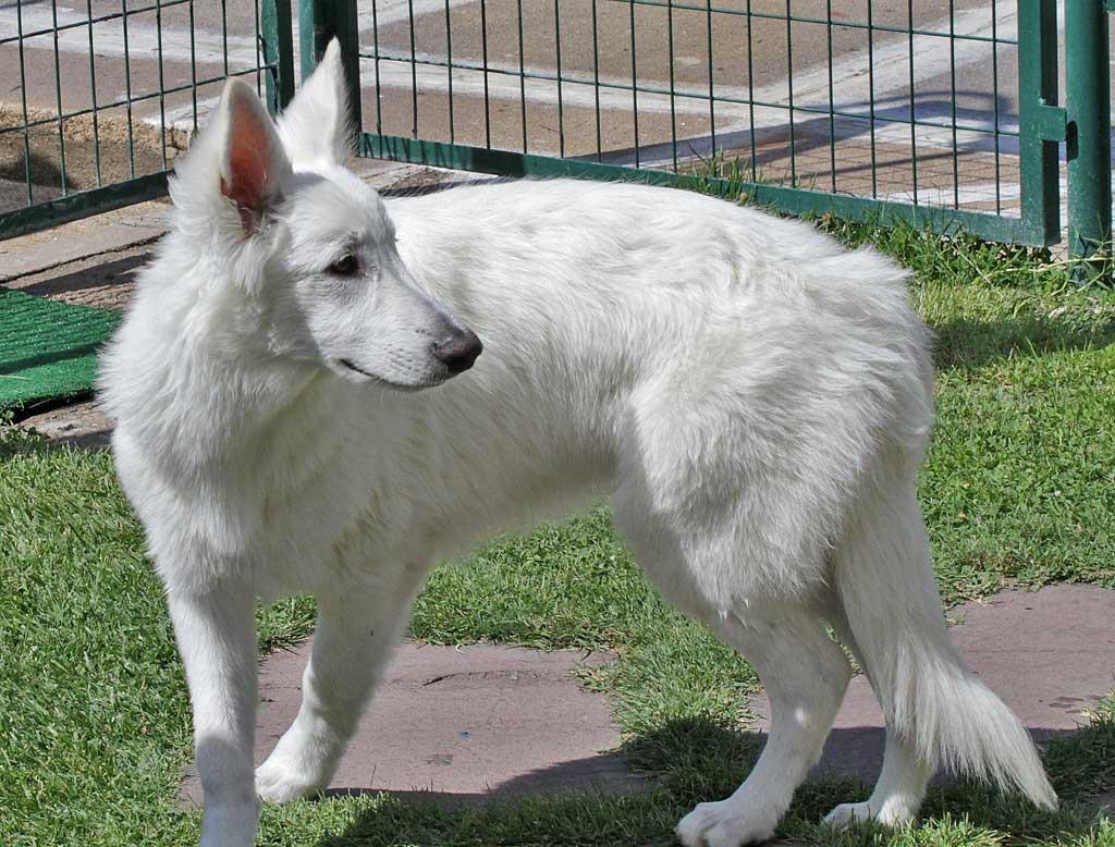 Ansiedad-separacion-perro