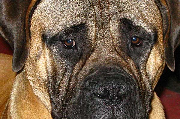 Nuestro comportamiento influye en la aparición de ansiedad por separación en los perros.