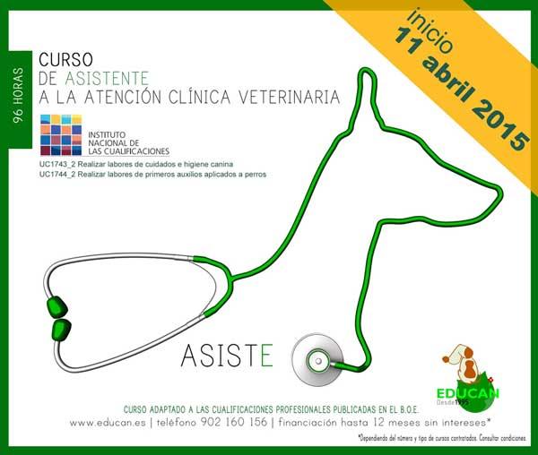 Nueva convocatoria del curso de Asistente a la Atención Clínica Veterinaria [ATV], que cumplimenta los requisitos de las Cualificaciones Profesionales.