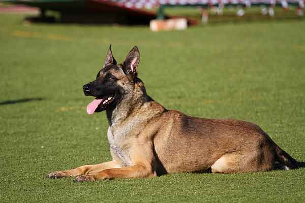 Deportes con perros, ¿los conoces todos?