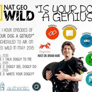 ¿Es tu perro un genio? Dognition en National Geographic Wild.