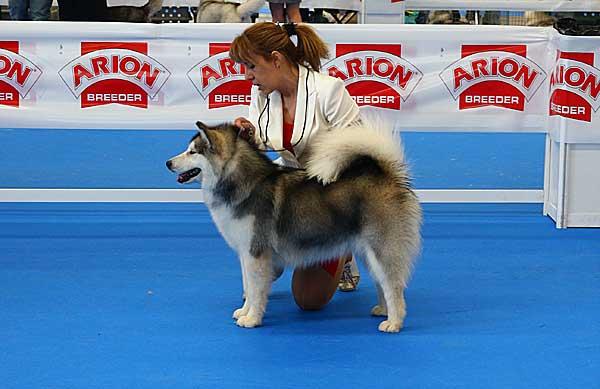 Exposición Canina Nacional e Internacional de Sevilla 2015