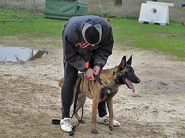 Tu perro trabajará mejor si te quiere (la magia de la oxitocina)