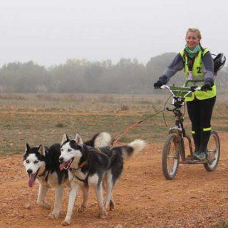 La I Carrera de Alfamén-Ruta de Altomira con perros de tiro, se celebrará los próximos 21 y 22 de marzo.