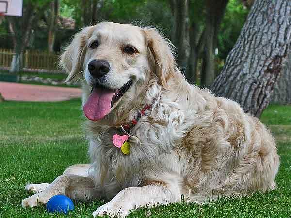 """10 formas de ayudar a los perros inseguros. ¿y si preparamos un """"plan de buenas experiencias""""?"""