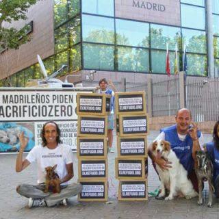 Día histórico en la Comunidad de Madrid el Sacrificio Cero de animales abandonados se debatirá en el pleno de la Asamblea de Madrid.