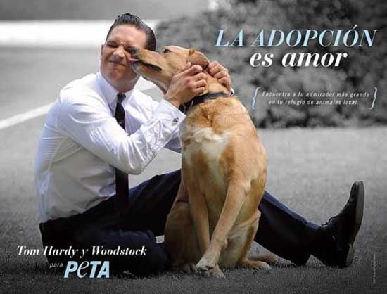 El amigo canino de Tom Hardy, la estrella de Mad Max a quien éste rescató, co-protagoniza campaña a favor de la adopción