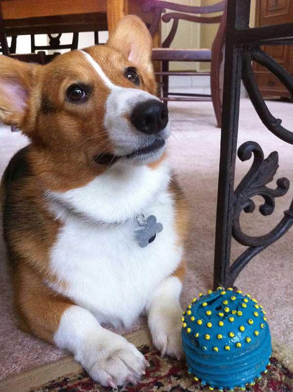 En un piso solo se puede tener un perro pequeño... ¿o no? 10 creencias (erróneas) sobre el tamaño de los perros.