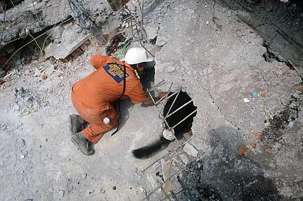 26 de Abril: Día internacional del perro de búsqueda y rescate.