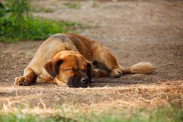 Los perros mayores necesitan cuidados especiales. 10 formas de cuidar (mejor) de tu perro mayor.