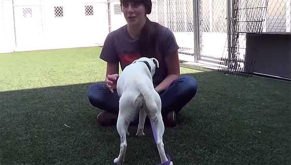 Rehabilitación de un perro agresivo (vídeo). Coconut es un perro rescatado de una granja de cachorro con muchos problemas de comportamiento.