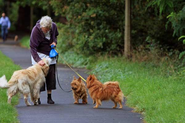 Dime cómo te ocupas de tu perro, ¡y te diré de qué nacionalidad eres!