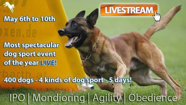 """FMBB2015 El """"Mundial del Perro de Pastor Belga"""" se celebrará del 7 al 10 de mayo próximos. En total participarán 400 perros en las disciplinas de Agility, Mondioring, IPO y Obediencia."""